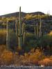 Ajo, Arizona (2)