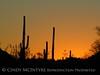 Ajo, Arizona (4)