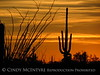Ajo, Arizona (8)