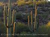 Ajo, Arizona (9)