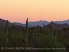 Ajo, Arizona (6)