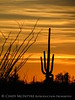 Ajo, Arizona (1)