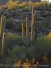 Ajo, Arizona (12)