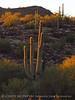 Ajo, Arizona (11)
