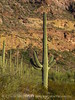 Ajo Mt Scenic Drive, Organ Pipe NM AZ (22)