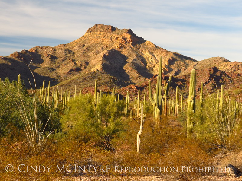 Ajo Mt Scenic Drive, Organ Pipe NM AZ (2)