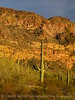 Ajo Mt Scenic Drive, Organ Pipe NM AZ (21)