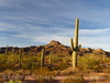 Ajo Mt Scenic Drive, Organ Pipe NM AZ (4)