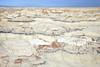 The Badlands at Bisti <br /> <br /> Bisti/De-Na-Zin Wilderness  <br /> Farmington, New Mexico <br /> (5II2-14329)