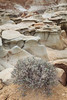 Bisti Badlands <br /> <br /> Bisti/De-Na-Zin Wilderness  <br /> Farmington, New Mexico <br /> (5II2-14408)