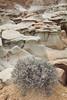 Bisti Badlands <br /> <br /> Bisti/De-Na-Zin Wilderness  <br /> Farmington, New Mexico <br /> (5II2-14408)