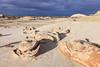 Egg Nest <br /> <br /> Bisti/De-Na-Zin Wilderness  <br /> Farmington, New Mexico <br /> (5II2-14614)