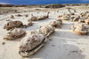 Dinosaur Eggs <br /> Bisti/De-Na-Zin Wilderness <br />   <br /> Farmington, New Mexico <br /> (5ii2-14597)