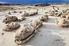 Dinosaur Eggs <br /> Bisti/De-Na-Zin Wilderness <br />   <br /> Farmington, New Mexico <br /> (5ii2-14597)