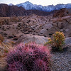 Alabama Hills: Purple Cactus at Dusk