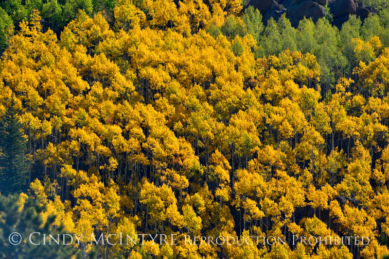 Aspen, Colorado springs (1)