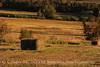 Mancos, CO hayfield (1)