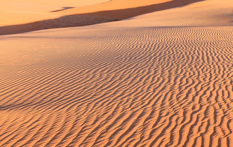 Coral Pink Sand Dunes <br /> <br /> Coral Pink Sand Dunes State Park <br /> Kanab, Utah <br /> (5II2-13870)