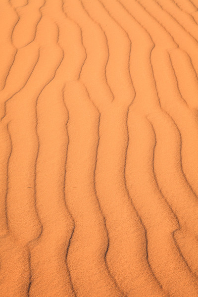Lines in the Sand <br /> <br /> Coral Pink Sand Dunes State Park <br /> (5II2-13854)