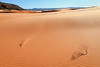 Life on the Dunes <br /> <br /> Coral Pink Sand Dunes State Park <br /> Kanab, Utah <br /> (5II2-13664)