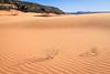 Coral Pink Sand Dunes Afternoon <br /> <br /> Coral Pink Sand Dunes State Park <br /> Kanab, Utah <br /> (5II2-13656)