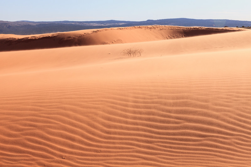 Winds on the Dunes <br /> <br /> Coral Pink Sand Dunes State Park <br /> Kanab, Utah <br /> (5II2-13668)