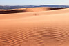 Winds on the Dunes <br /> <br /> Coral Pink Sand Dunes State Park <br /> Kanab, Utah <br /> (5II2-13668)