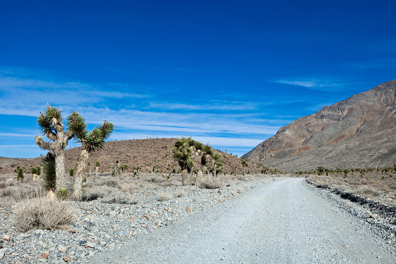 Yuccas along the Road to Racetrack <br /> Racetrack Playa <br /> Death Valley National Park <br /> Death Valley, California <br /> (5II2-09513)