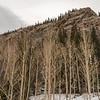 Aspen Forest III
