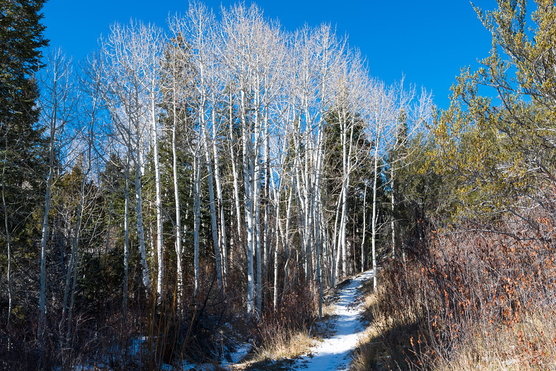 Aspen Forest I