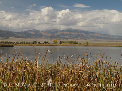Monte Vista Wildlife Refuge, CO