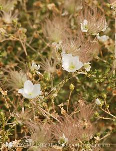 Southwest Flowers