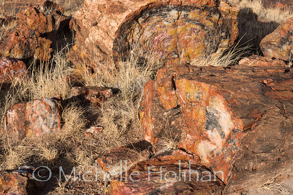 Petrified trees