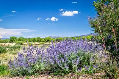 Tamaya landscape, NM