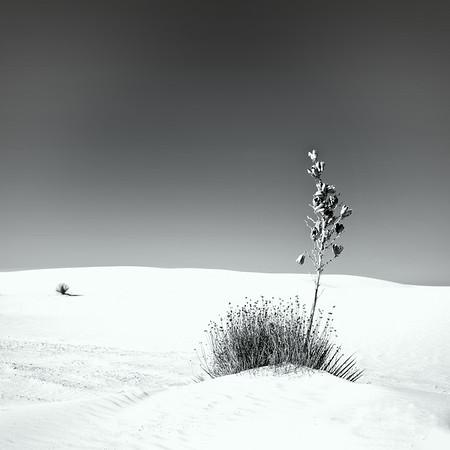 White Sands, NM<br /> © Sharon Thomas