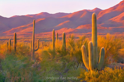 Sunset Saguaros
