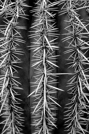 Spiny Defense - Cactus - Oro Valley, AZ