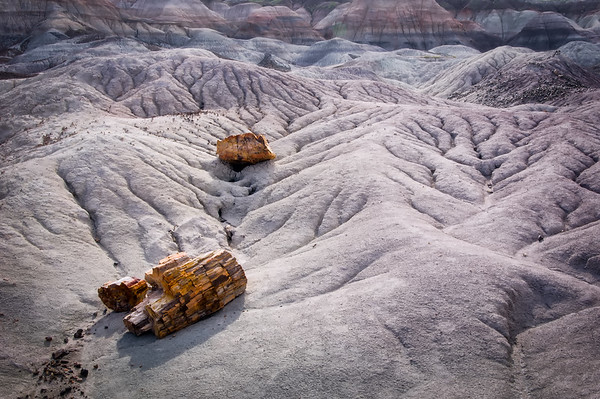 Petrified Forest<br /> © Sharon Thomas