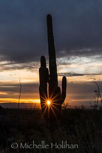 Sunset behind a Saguaro
