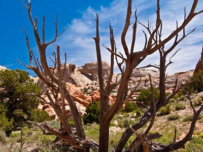 Burr Trail Capitial Reef National Park Utah