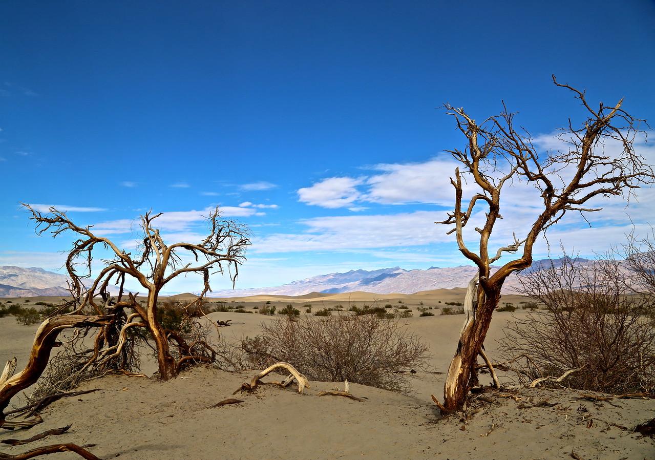 Dali in Death Valley