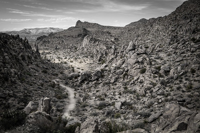 Grapevine Trail - B&W
