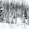 Winter - Santa Fe Ski Basin 2<br /> © Sharon Thomas