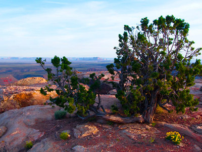 Muley Point Utah