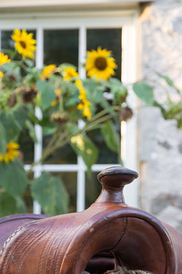 Saddle Horn