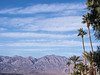 Palm Trees and Desert, Death Valley CA