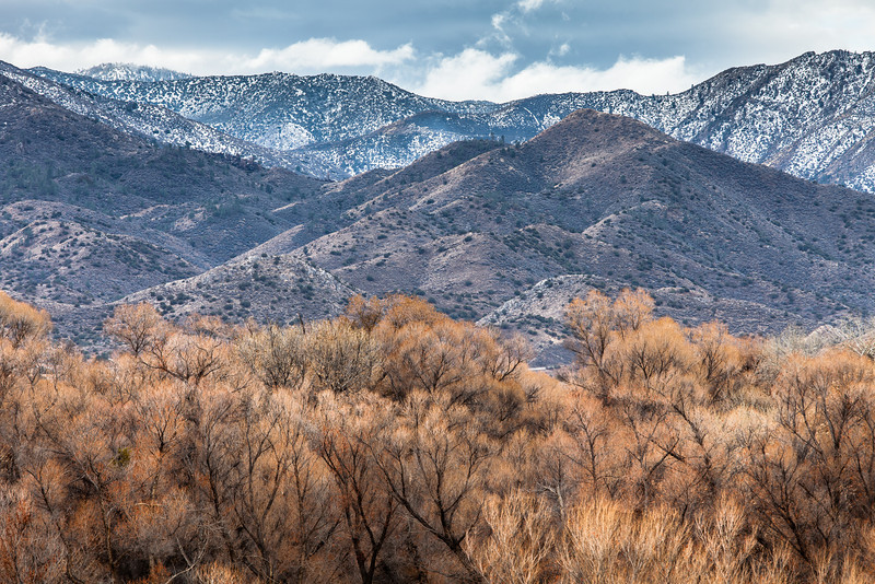 Red Willows in Winter, Lake Isabella CA