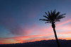 Palm Tree Silhouette at Sunset, Death Valley CA