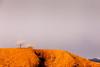 Sagebrush and Red Rock, Nevada
