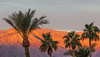 Palm Trees and Morning Alpenglow, Death Valley CA